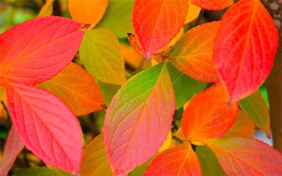 Mélange de feuilles