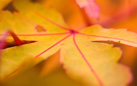 Feuilles jaunes d'automne