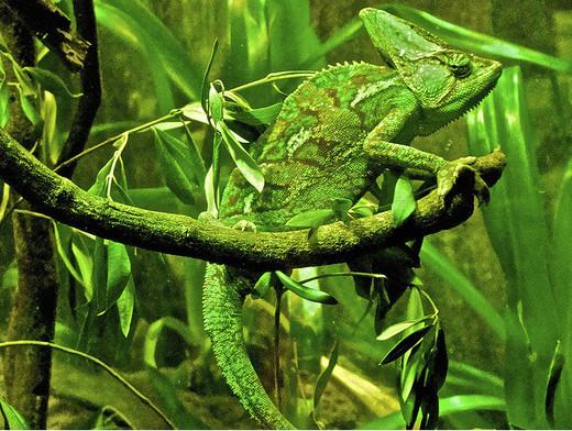 Photographie17 de camouflage d'animaux