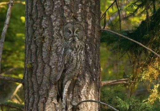 Photographie19 de camouflage d'animaux
