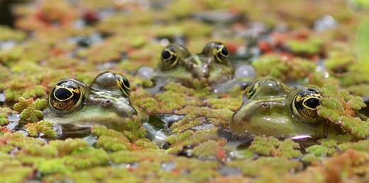 Photographie20 de camouflage d'animaux