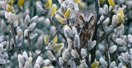 Photographie21 de camouflage d'animaux