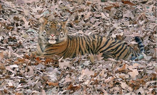 Photographie29 de camouflage d'animaux
