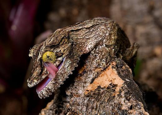Photographie3 de camouflage d'animaux