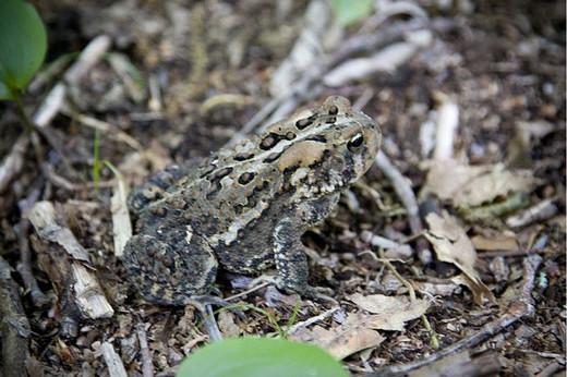 Photographie31 de camouflage d'animaux