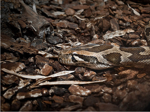 Photographie35 de camouflage d'animaux