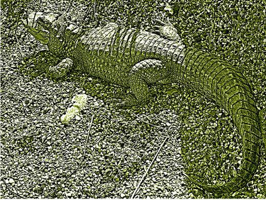 Photographie36 de camouflage d'animaux