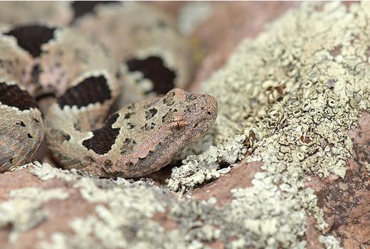 Photographie38 de camouflage d'animaux