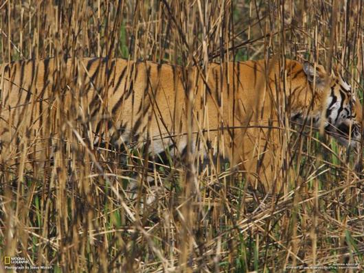 Photographie54 de camouflage d'animaux