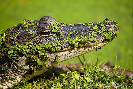 Photographie7 de camouflage d'animaux