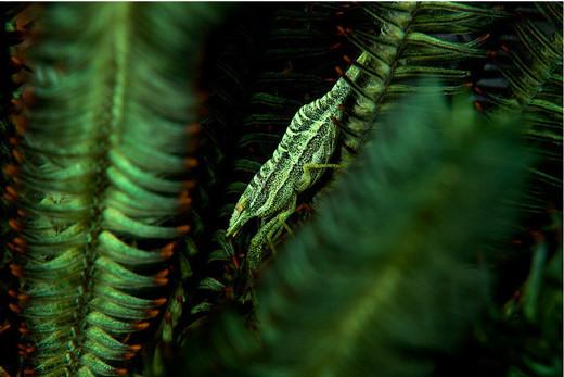 Photographie9 de camouflage d'animaux