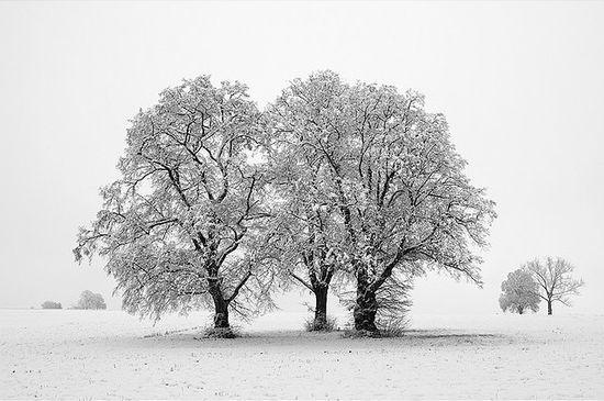 photographies de paysages d'hiver 141