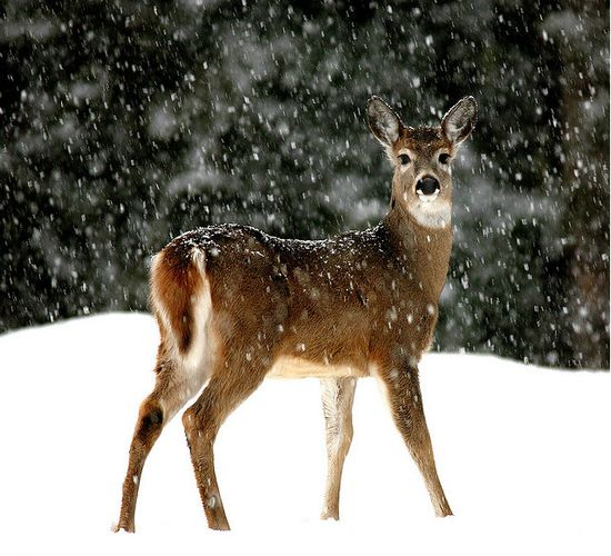 photographies de paysages d'hiver 19