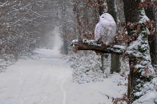 Vendredi 8 janvier Paysage-hiver-25