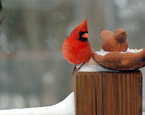 photographies de paysages d'hiver 271