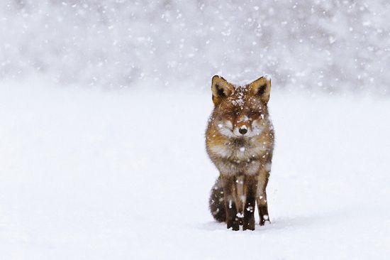 photographies de paysages d'hiver 291