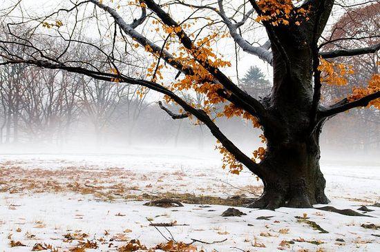 photographies de paysages d'hiver 361