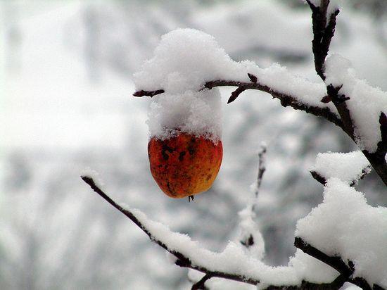 photographies de paysages d'hiver 371