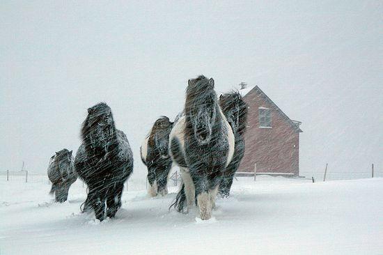 photographies de paysages d'hiver 451