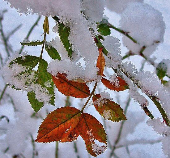 photographies de paysages d'hiver 501