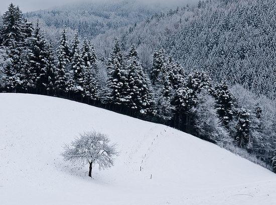photographies de paysages d'hiver 511