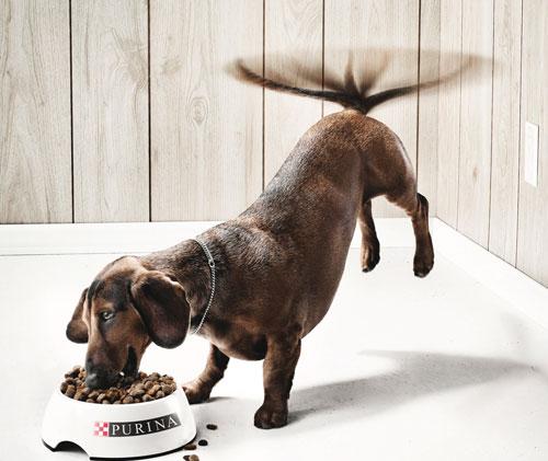 Publicité nourriture pour chien Purina