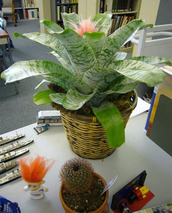 Utilisation des plantes