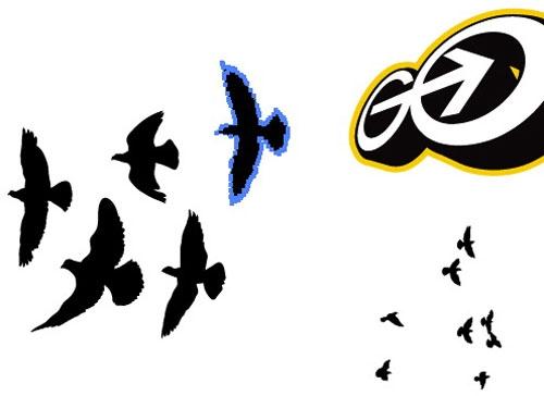Des oiseaux animés avec After Effects