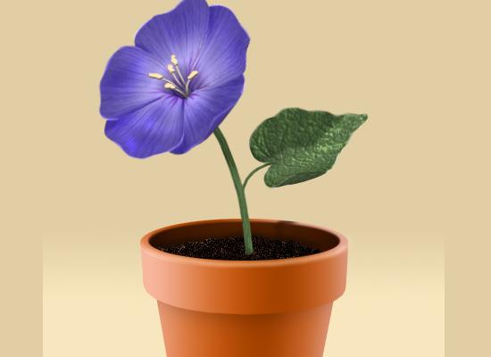 Photoshop : pot de fleurs