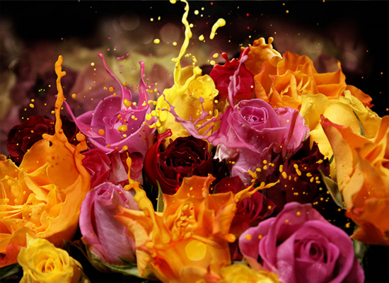 Photoshop : Un bouquet de rose suréel