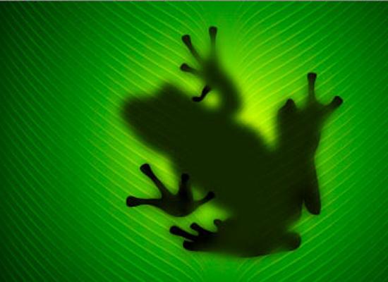 Photoshop : La création d'une grenouille