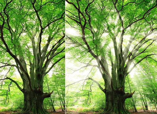 Photoshop : Les rayons de soleil dans les arbres
