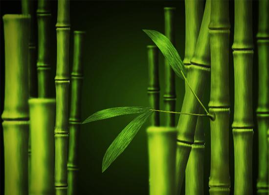 Bambou dans Photoshop
