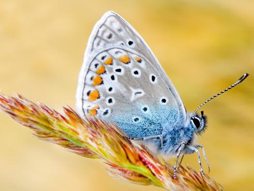 Un papillon - 50 fonds d'écran à couper le souffle