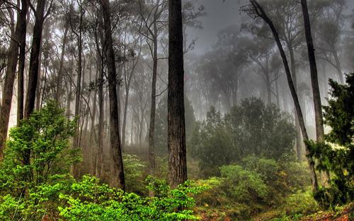 Forêt sombre - 50 fonds d'écran à couper le souffle