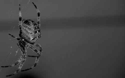 Araignée - 50 fonds d'écran à couper le souffle