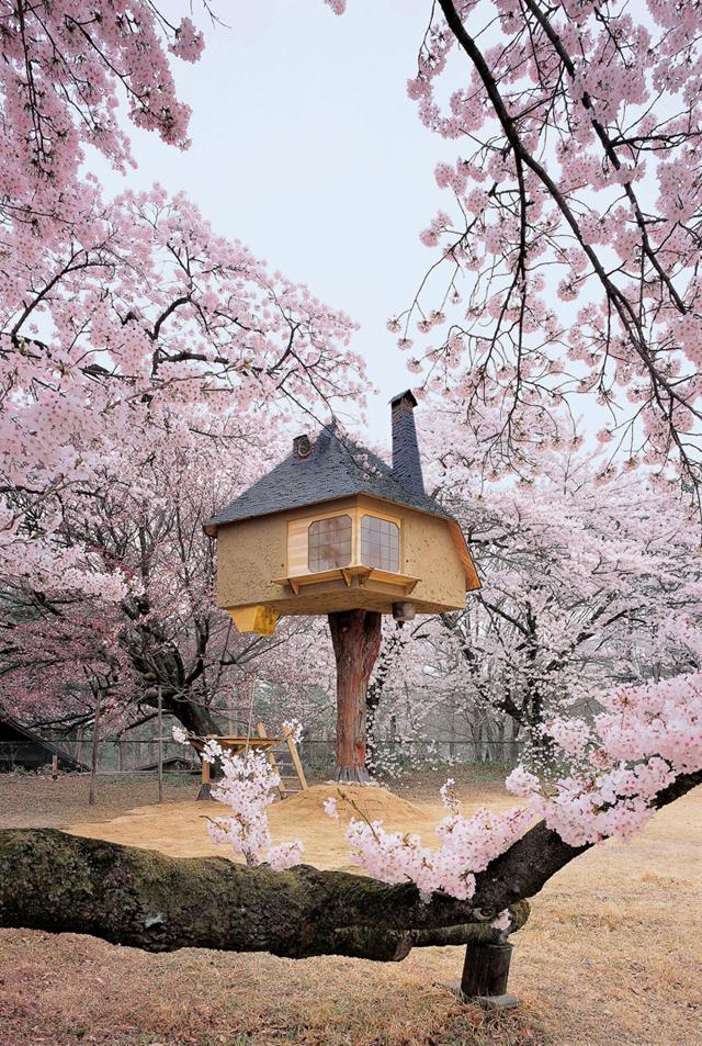 prenez-de-la-hauteur-avec-ses-somptueuses-maisons-perchees-dans-les-arbres61