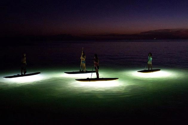 nocqua-standup-paddle-lights
