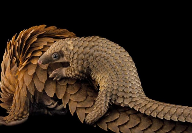 national-geographic-2016-JOEL-SARTORE